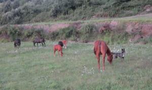 Pen al lavoro con i cavalli