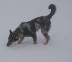 Belen sulla neve